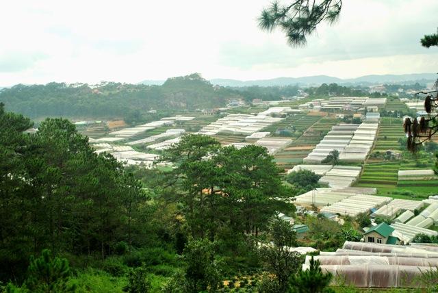Nhật Bản hỗ trợ tỉnh Lâm Đồng xây dựng mô hình nông nghiệp hiện đại
